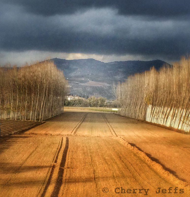 Empty fields and saplings in Andalusia, Spain. Photo © Cherry Jeffs 2014