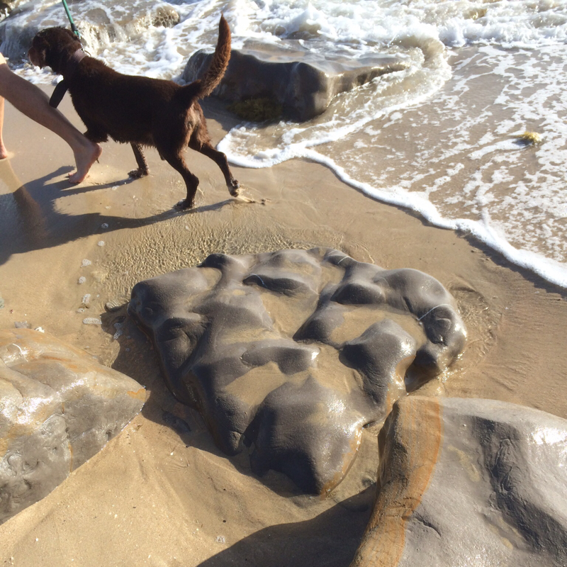 dog, sea, interesting rock formation in the sand